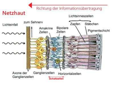 Abb. 1 Aufbau der Netzhaut