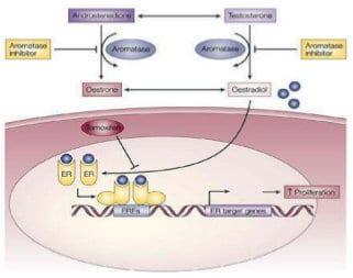 Progesteron: Prävention und Therapie bei malignen Erkrankungen