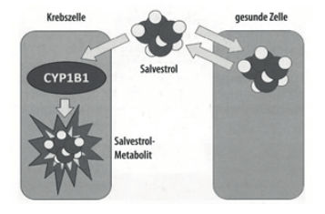 Cancer-inhibiting salvestrol
